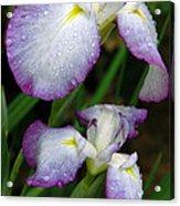 Elegant Purple Iris Acrylic Print