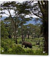 Elephant   #0068 Acrylic Print