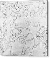 Elephant Acts, 1880s Acrylic Print