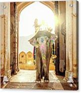 Elephant At Amber Palace Jaipur,india Acrylic Print