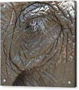 Elephant Eye Chiang Mai, Thailand Acrylic Print