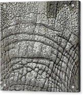 Elephant Eyes Acrylic Print