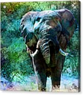 Elephant - Featured In Comfortable Art- Wildlife- And Nature Wildlife Groups Acrylic Print