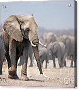 Elephant Feet Acrylic Print
