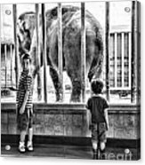 Elephant I Acrylic Print