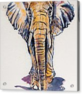 Elephant In Gold Acrylic Print