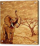 Elephant Majesty Original Coffee Painting Acrylic Print