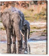 Elephant Mother And Calf Acrylic Print