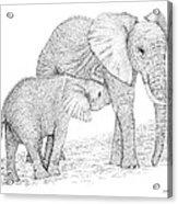 Elephant Mother Acrylic Print