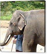 Elephant Srinon Painting Flowers Acrylic Print