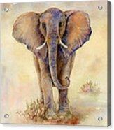 Elephant  Acrylic Print