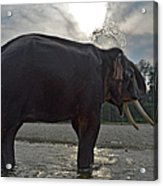 Elephant Taking A Shower On Its Own Acrylic Print