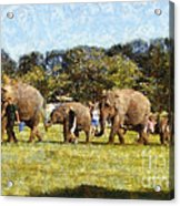 Elephant Train  Acrylic Print