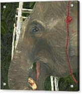 Elephant Under His Thumb Acrylic Print