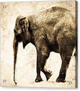 Elephant Walk Acrylic Print