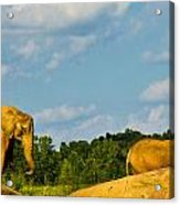 Elephants Among The Rocks. Acrylic Print