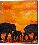 Elephants At Sunset Acrylic Print