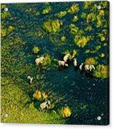 Elephants From Above Acrylic Print