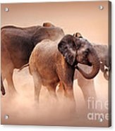 Elephants In Dust Acrylic Print