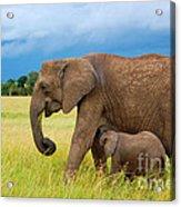 Elephants In Masai Mara Acrylic Print