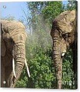 Elephants In The Sand Acrylic Print