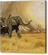 Elephants Moving Before A Fire Acrylic Print