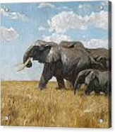 Elephants On The Move Acrylic Print
