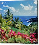 Elevated View Of Trees And Plants Acrylic Print