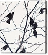 Eleven Birds One Morsel Acrylic Print