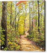 Elfin Forest Acrylic Print