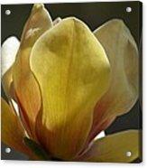 Elizabeth Magnolia Acrylic Print