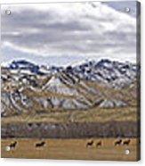 Elk At Sheep Mountain - 21x120 Acrylic Print