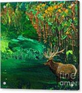 Elk Fall Acrylic Print