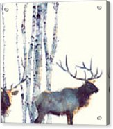 Elk // Follow Acrylic Print