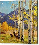 Elk Herd In Aspen Grove Acrylic Print