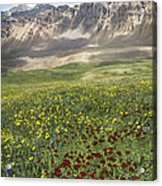 Elk Mountain Wildflowers Acrylic Print