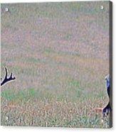 Elk On The Plains 1 Acrylic Print