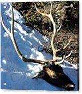 Elk Preservation. Acrylic Print