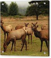 Elks Lodge Acrylic Print