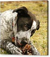 Ellie Vs. The Pine Cone Acrylic Print