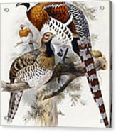 Elliot's Pheasant Acrylic Print by Joseph Wolf