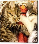 Elmos Nap Time---soft Look Acrylic Print