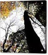 Elora Trees II Acrylic Print