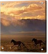 Elusive Wild And Free Mustangs Acrylic Print by Jeanne  Bencich-Nations