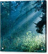 Elven Forest Acrylic Print