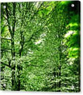 Emerald Clearing Acrylic Print
