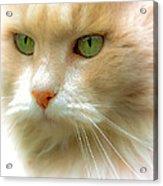 Emerald Eyes Acrylic Print