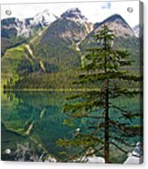 Emerald Lake Reflection And Pine Tree In Yoho National Park-british Columbia-canada Acrylic Print