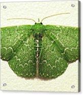 Emerald Moth Acrylic Print