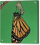 Emergence I Acrylic Print by Clarence Holmes